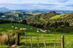 Туристический сектор Новой Зеландии развивается очень бурно
