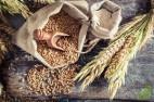 Урожай зерна в России в этом году ожидается в пределах 100 млн тонн