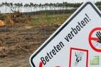 Tesla разрешили вырубить лес для постройки первого завода в Европе